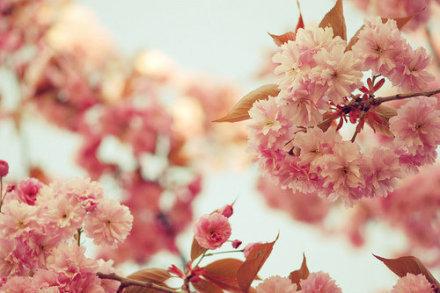 2016考研英语:如何利用春季复习黄金期