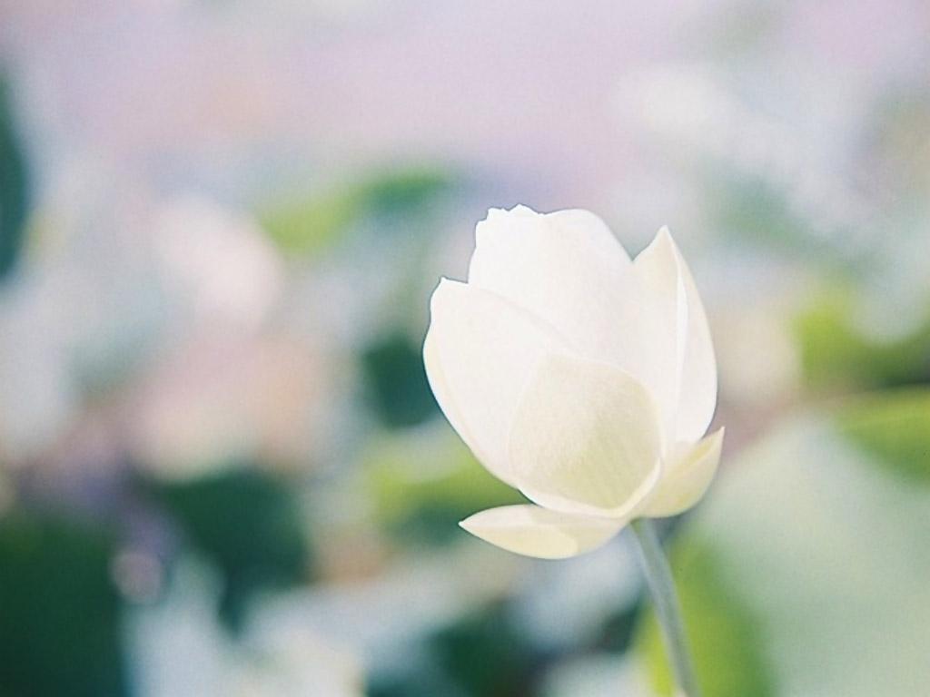 春天大风唯美图片